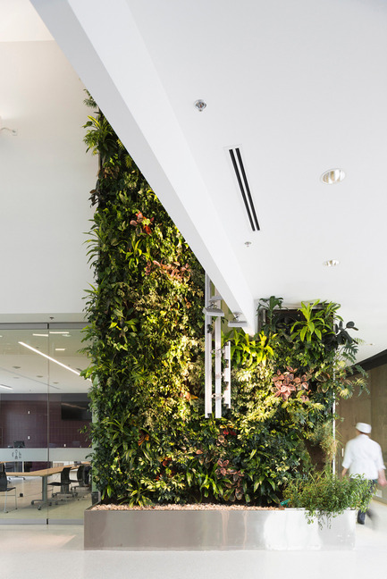 Dossier de presse | 1866-01 - Communiqué de presse | Durham College Centre for Food - Gow Hastings Architects - Institutional Architecture - A lush, green, two-storey herb garden living wall in the central atrium - Crédit photo : Remi Carreiro