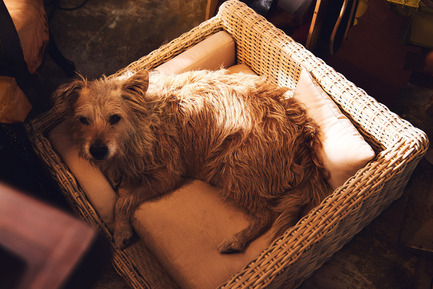 Press kit | 2438-01 - Press release | Swiss Start-Up Embellishes the Lives of Dogs and Owners - Volentis GmbH - Product - IDA Silver Award Winner - LABONI Dog Bed Cosmopolitan - Photo credit: Volentis GmbHIDA Silver Award Winner - LABONI Dog Bed Cosmopolitan<br>