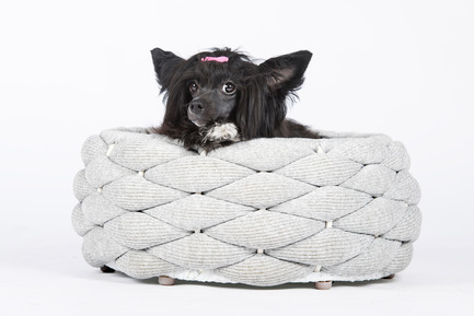 Press kit | 2438-01 - Press release | Swiss Start-Up Embellishes the Lives of Dogs and Owners - Volentis GmbH - Product - European Product Design Award Winner - LABONI Dog Bed RIVA<br> - Photo credit: Volentis GmbH<br>