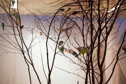 Dossier de presse | 962-01 - Communiqué de presse | La folie de Charles, sa table et ses hôtes - Charles Kaisin - Produit - 40 oiseaux en liberté - De branche en branche - Crédit photo : Marie-Françoise Plissart
