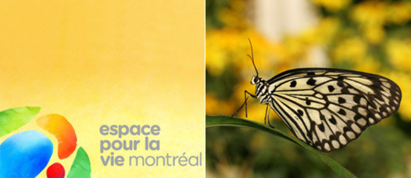 Press kit - Press release - Space for Life Architecture CompetitionThree Major Projects for Montréal's 375th Anniversary in 2017 - Bureau du design - Ville de Montréal